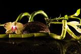 Fototapety Orchideen mit Bambus und Kokosnuss