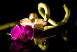 Orchideen mit Wasserspiegelung und Bambus