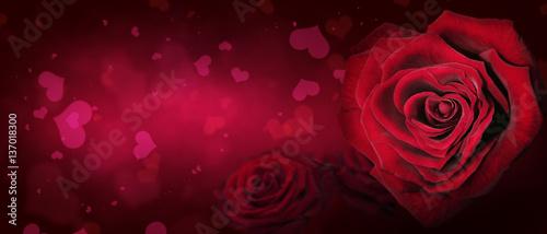 Staande foto Roses Rosen - ein Zeichen der Liebe