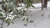 北国の降雪