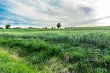 Field of grass, green meadow in spring, landscape
