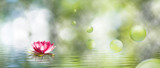 Fototapety  image of lotus flower on the water