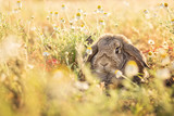 Bunny on camomile meadow