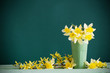 Daffodil in vase on green background