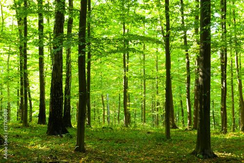 Keuken foto achterwand Bossen Sunlight in forest