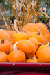 pumpkins pile