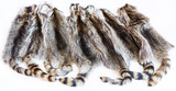 lot of natural raccoon pelts