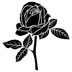 Roses bud flower on the stalk