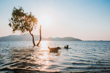tree in water with blur of dog and mountain background at Bang Phra Reservoir Sriracha,Chonburi, Thailand.