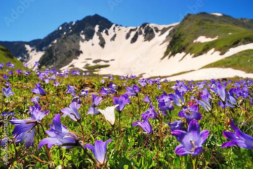 Keuken foto achterwand Nieuw Zeeland Alpine meadows and blue sky in the Caucasus summer. Bellflowers in the foreground.