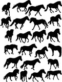 twenty three black horses on white