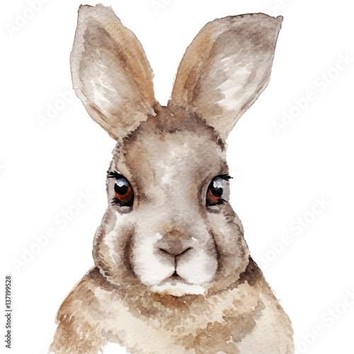Watercolor rabbit portrait - 137199528
