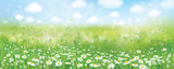 Vector summer nature  background,  blossoming flowers field  and  blue sky.
