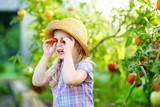 Adorable little girl wearing hat picking fresh ripe organic tomatoes in a greenhouse