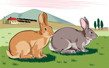 Rabbits in a landscape.