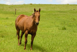 Horse and Pasture