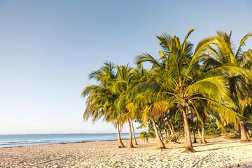 Seascape. Palm trees on the seashore