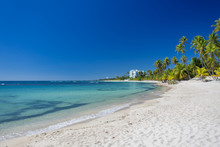 Tropical sand Beach on the Caribbean sea. Clear blue sea and high palm trees