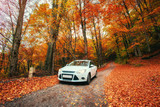 car on a forest path. Autumn Landscape. Ukraine. Europe - 137249105