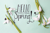 Hello spring note with fresh snowdrops
