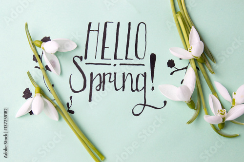 Fototapeta Hello spring note with fresh snowdrops