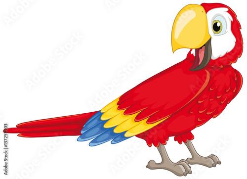 Niedlicher Papagei Vektor-Illustration