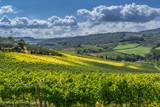 Autumn Landscape with vineyards in Tuscany, Italy