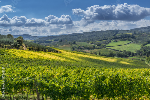 Plakat Autumn Landscape with vineyards in Tuscany, Italy
