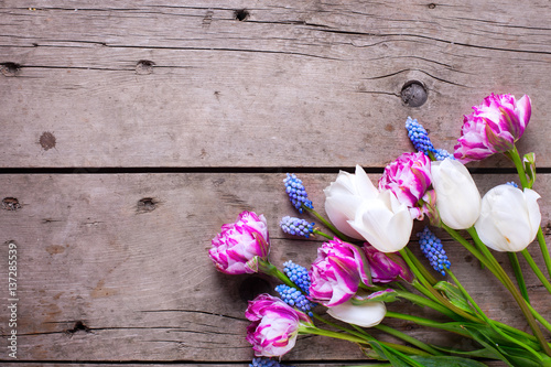 Violet and white tulips and muscaries flowers on aged wooden  background.
