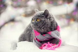 Fashion portrait of cat wearing knitting scarf in snowy winter
