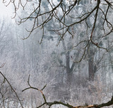 snow fairy forest in the fog framed by twigs