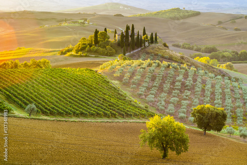 Foto op Plexiglas Toscane Tuscan autumn landscape in the light of the rising sun