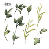 Leaves, watercolor, can be used as greeting card, invitation card for wedding, birthday and other holiday and  summer background - 137353735