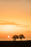Landschaft mit Bäumen bei Sonnenaufgang