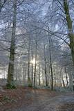 winterwald, schweiz