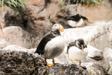 Photo Picture of Wild Penguin Animal Bird Playing