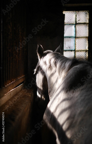 Horse closeup. The horse in the stable.