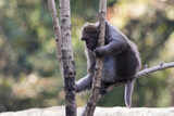 Image of a monkey on the tree on nature background. Wild animals.