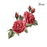 Bouquet of roses, watercolor, can be used as greeting card, invitation card for wedding, birthday and other holiday and  summer background. - 137462394