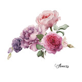 Bouquet of roses, watercolor, can be used as greeting card, invitation card for wedding, birthday and other holiday and  summer background. - 137465159