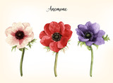 Anemone, watercolor, can be used as greeting card, invitation card for wedding, birthday and other holiday and  summer background.  Vector illustration. - 137472151
