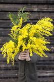 Ragazzo regala delle mimose visto di fronte. Festa della donna concetto.
