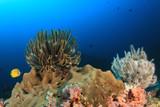 Coral reef and fish in underwater ocean