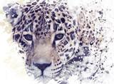 Fototapeta Leopard Portrait Watercolor