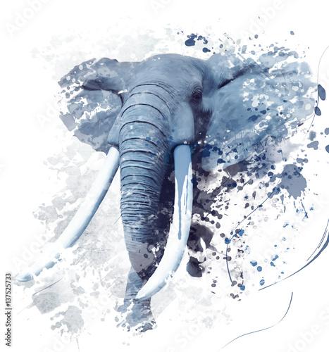 Fototapeta Elephant Portrait Watercolor