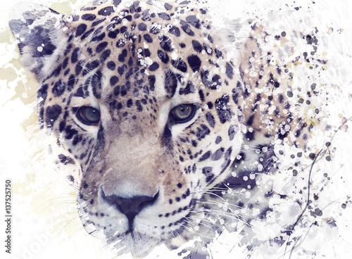 Fototapeta Leopard Portrait Watercolor