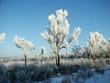 зимний лес в Амурской области Россия
