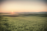 Vintage Green Fields on Sunset