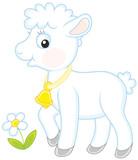 Small white lamb