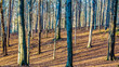 canvas print picture - Striped ground